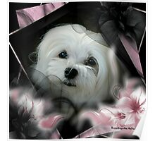 Snowdrop the Maltese  Poster