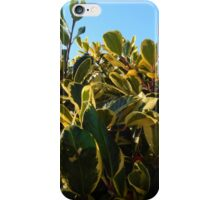 HOLLY WITH RED BERRY iPhone Case/Skin