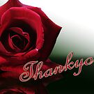 thankyou red rose by picketty
