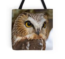Saw Whet Owl - Amherst Island, Ontario Tote Bag