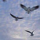 Seagulls in flight by Cyndi Jamerson