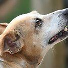 Ratt Terrier by DebbieCHayes