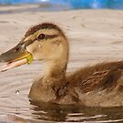 I Can Talk With Food In My Mouth - Mallard Duckling - NZ by AndreaEL