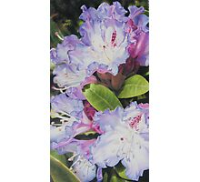 'Rhododendron' Photographic Print