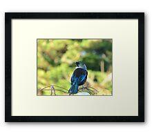 Anyone Need A Parson Around Here? - Tui - NZ Framed Print