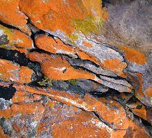 Lichen Art 2 by Madonna McKenna