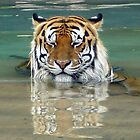 Tiger Time Out by Shannyn
