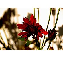 Prairie Photographic Print
