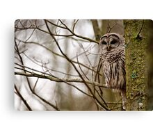 Barred Owl - Presqu'ile Park Canvas Print