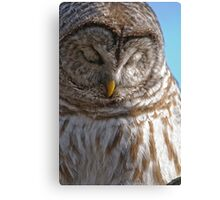 Barred Owl in Tree - Brighton, Ontario Canvas Print