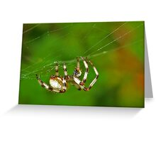 Web Surfing Greeting Card