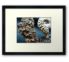 Fossilized Seashells Framed Print