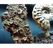 Fossilized Seashells Photographic Print