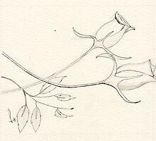 Rose bud by T Pryke