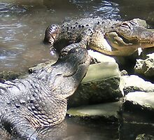 Sunbathing aligators by Gareth Prescott