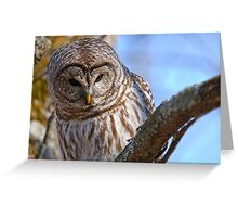 Barred Owl - Brighton Ontario Greeting Card