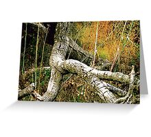 Giant Walking Through The Woods Greeting Card