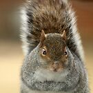 The Cross-Eyed Squirrel by Bine