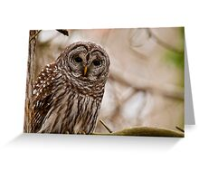 Barred Owl - Presqu'ile Provincial Park  Greeting Card