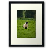 Who Ewe? Framed Print