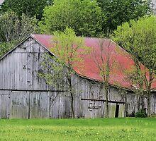 Kentucky Barn by Rachel Leigh