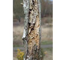 Tree Damage Photographic Print
