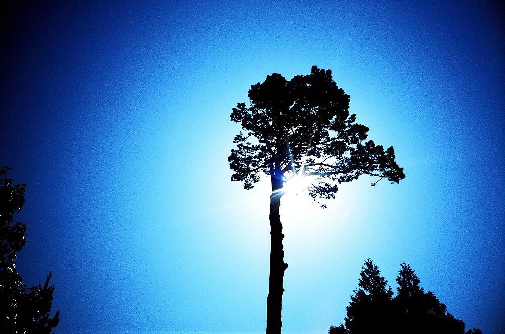 Tree by presty