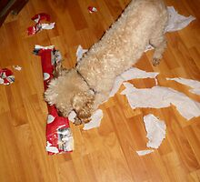 Bugger Paul Opening His Christmas Chew Toy by WildestArt