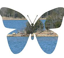 butterfly lake by angelawillene