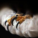 Eagle Talons by Kimberly Palmer