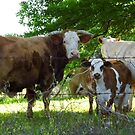 The MOO Family by WildestArt