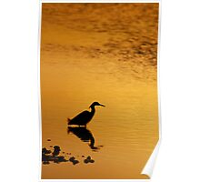 Snowy Egret Silhouette Poster