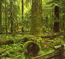 Cathedral Grove, Vancouver Island by Freedom