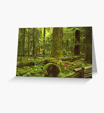Cathedral Grove, Vancouver Island Greeting Card