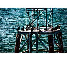 Birds in Boston Harbor Photographic Print