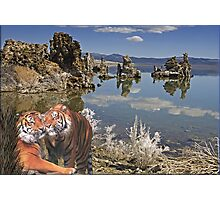 NA769-Inspiration Point (Tiger Style) Photographic Print
