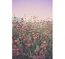 Floral Sunset Photographic Print
