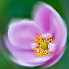 Anemone Hadspen  by DIANE  FIFIELD