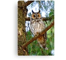 LEO - Long Eared Owl - Ottawa, Ontario Canvas Print