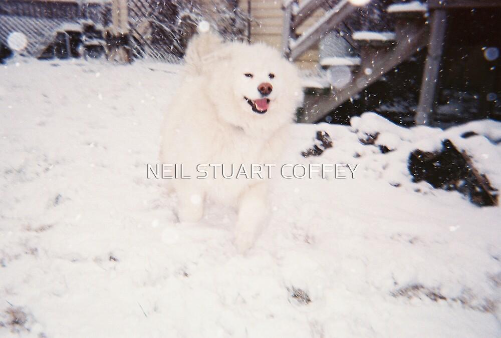 SNOWBEAR by NEIL STUART COFFEY