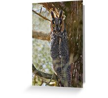 Long Eared Owl - Amherst Island, Ontario Greeting Card