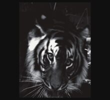 tiger black and white by Virginia McGowan