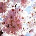 Spring Bloom by Ryan Nowell