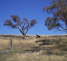 Australian Stockman by Chantel Martin