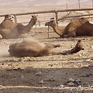 Camels in the desert by elijah12008