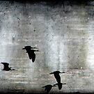 Fly by Night by Kitsmumma