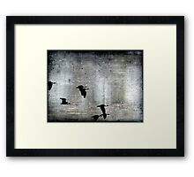 Fly by Night Framed Print