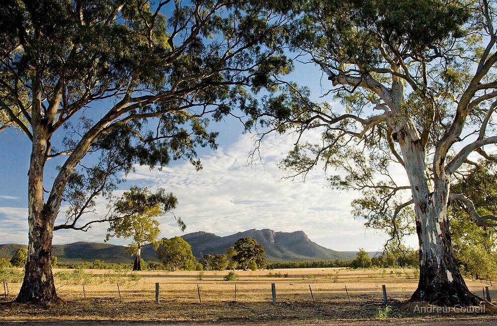 grampian redgums by Andrew Cowell