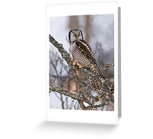 Northern Hawk Owl on branch Greeting Card