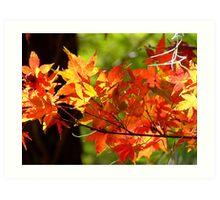 Autumn Shades... Art Print